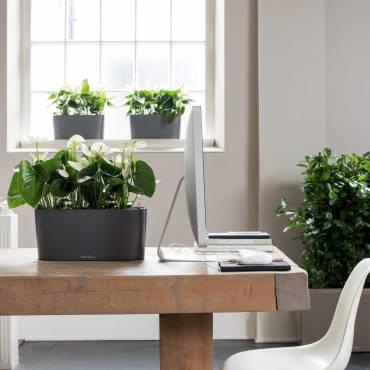 Design Floral intérieur