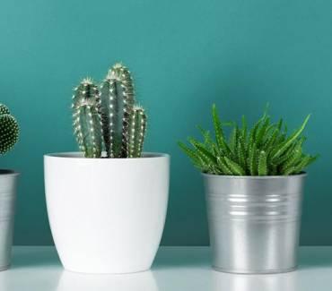 Les Meilleures Plantes De Bureau